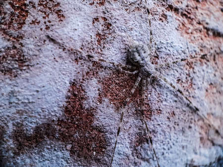 The gray spiders stand on the walls and the walls are white, the spiders have 6 legs.