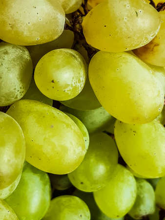 Light green and yellow grapes are many together. The grapes are very sweet and delicious, these have been put up for sale in a basket. 스톡 콘텐츠