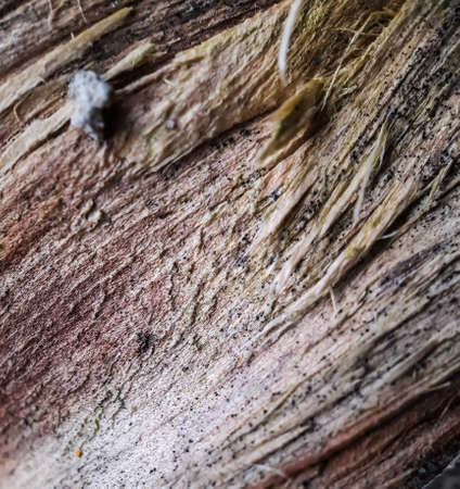 Picture of the dried part inside the tree after the tree is broken. This is a picture in a garden. Reklamní fotografie