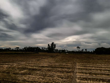 Agricultural land and cloudy skies in rural India at sunset. New vegetables have been planted in the green land. 写真素材