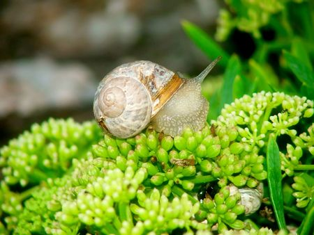parsimony: a snail out of its shell Stock Photo