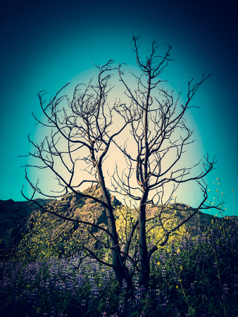 Burnt Tree Surrounded by Wildflowers in Malibu Creek State Park