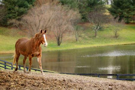 Horse photo taken in Spring in London, Kentucky Stock fotó - 23991398