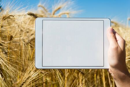 oat field: Hand holding tablet in oat field during summer