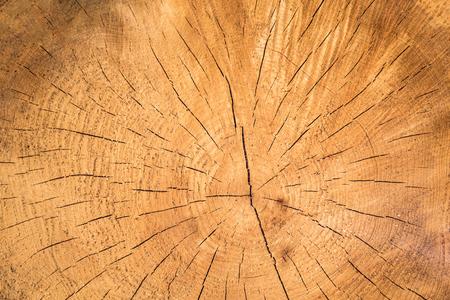 목재 나무의 구덩이 연례 반지를 보여줍니다