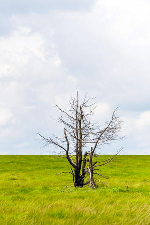 Single tree stand alone in landscape of high fens National Park near Aachen at Eifel and Ardennes
