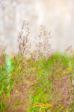 Detail of grasses in nature in nature conservation area High Fens Venn in Germany Belgium