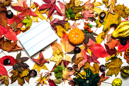 Moody autumn background picture with colorful leaves, pumpkins, chestnuts with white blank light box with free space for message as template Standard-Bild