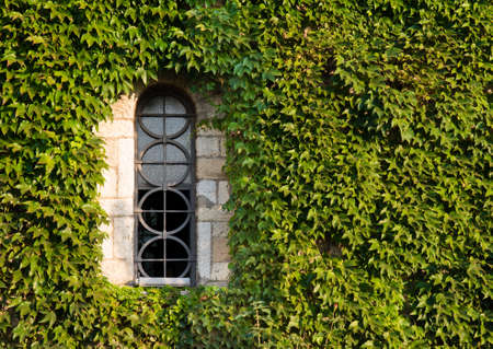 medeival: Window with ivy