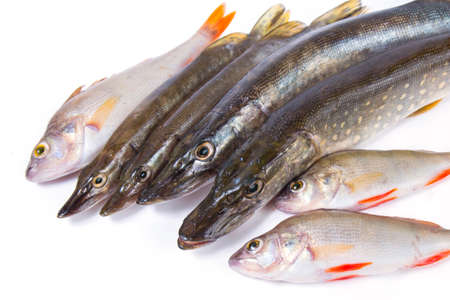 Raw fish. Pike and perch on white background.