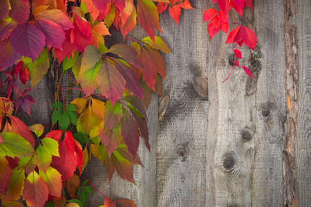 colored autumn leaves on a wooden background