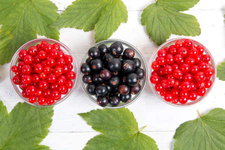 leaves and berries of black and red currant