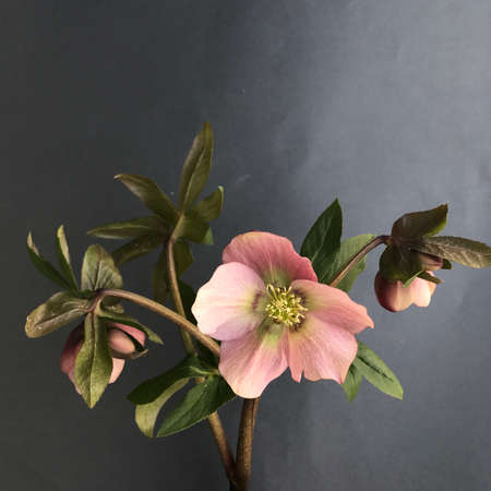 Beautiful flower on a grey background