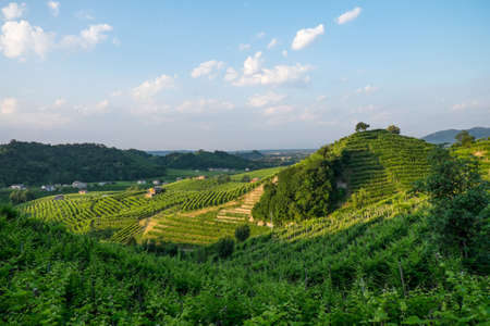Hillside vinyards near Valdobbiadene