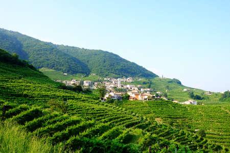 santo: Santo Stefano village near Valdobbiadene surrounded by vinyards