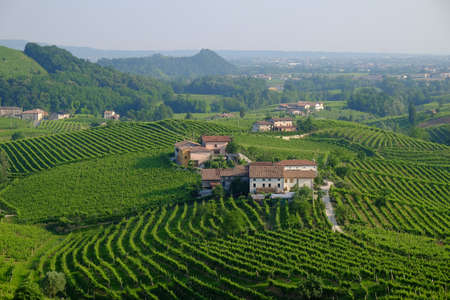 Countryside filled with vineyards Veneto region of Italy