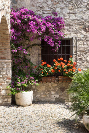 courtyard: Cobbled courtyard garden with pink bougainvillea flowers and red pelargoniums