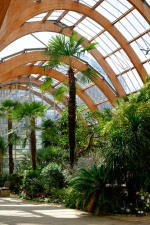 sheffield: Palm trees in Sheffield Winter Gardens