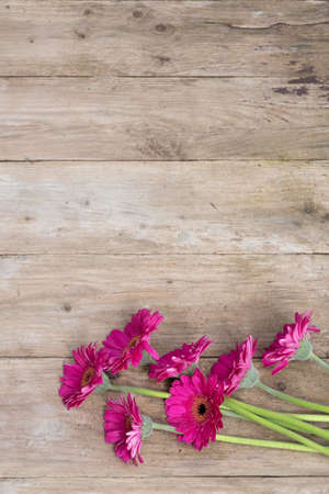wood table: Bright pink flowers on wood table