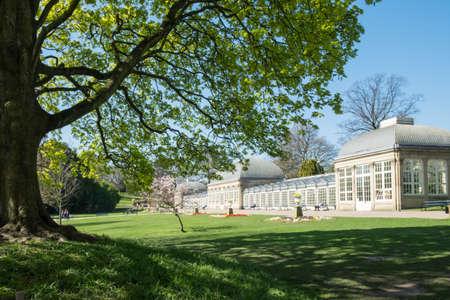 edwardian: Edwardian glasshouses at Sheffield Botanical Gardens