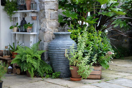 herbs boxes: Herbs growing in pots outside cottage