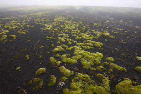 volcanic landscape: Volcanic landscape with moss and dark ground in Lakagigar, Iceland South area Stock Photo