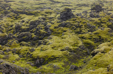 volcanic landscape: Volcanic landscape with moss in Lakagigar, Iceland South area