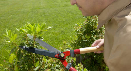 Gardener cutting a green plant  Horizontal  Stock Photo