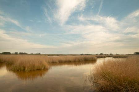 Wetland landscape in warm tone