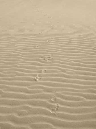 clues: Dunes landscape with clues in Lencois Maranhenses.  Stock Photo