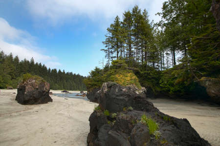 scott: Landscape in Cape Scott Park. Vancouver. British Columbia. Canada.