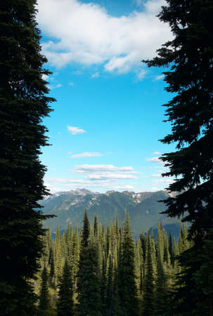 Landscape with forest in British Columbia. Mount Revelstoke. Canada. Vertical