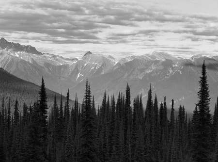 Landscape with forest in British Columbia. Mount Revelstoke. Canada. Horizontal