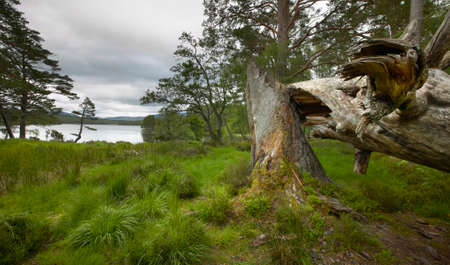 broken hill: Scottish landscape with lake and broken trunk. Horizontal format Stock Photo