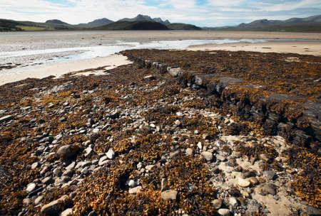 Scottish landscape with seaweed and sand. Highlands. Scotland. UK photo