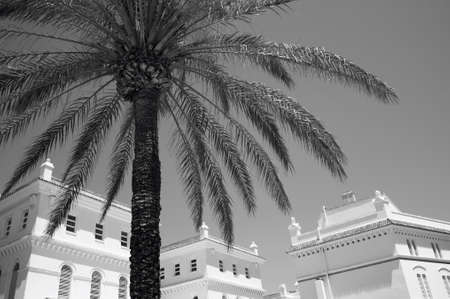 cadiz: Palm tree and white colonial buildings in Cadiz. Spain. Horizontal
