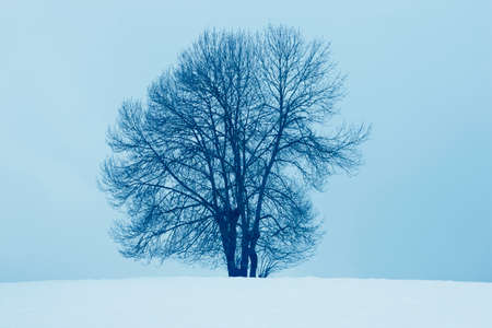 Winter landscape with tree and snow in Navarra, Spain. Horizontal photo