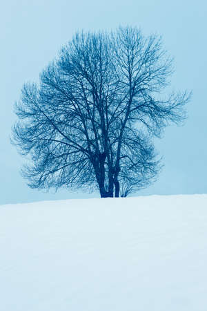 navarra: Winter landscape with tree and snow in Navarra, Spain. Vertical