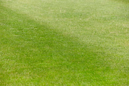 cut the grass: Football and rugby green field with freshly cut grass detail. Horizontal