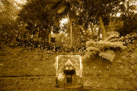 subtropical: Ancient fountain and subtropical forest in sepia tone. Azores. Portugal. Horizontal Stock Photo