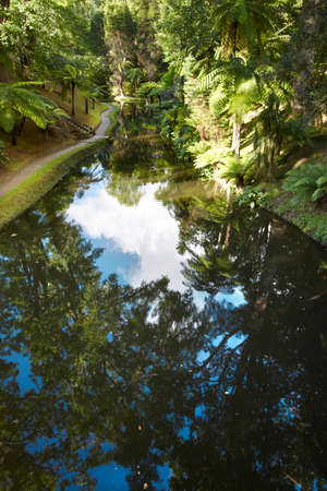 subtropical: Lake, subtropical forest and pathway in Sao Jorge, Azores. Portugal. Vertical