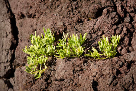jorge: Volcanic formation detail with green plants in Sao Jorge. Azores. Portugal Stock Photo