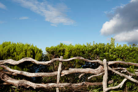 agriculture azores: Rustic wooden fence with green vegetation blue sky in Azores. Pico. Portugal