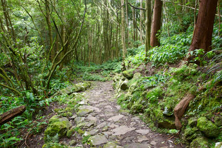subtropical: Rocky pathway in a wet green subtropical forest. Azores, Portugal. Vertical
