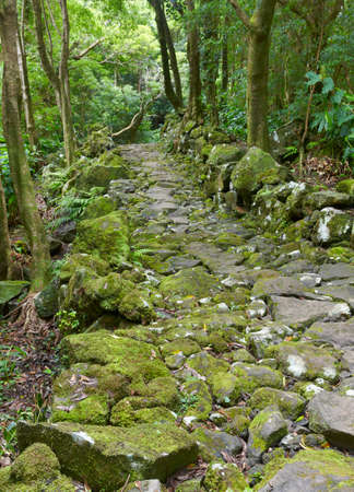 subtropical: Rocky pathway in a wet subtropical green forest. Azores, Portugal. Vertical Stock Photo