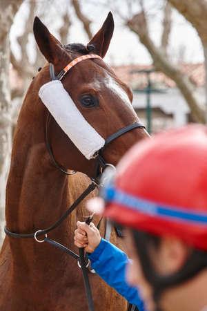 hippodrome: Race horse head and jockey ready to run. Paddock. Vertical Editorial