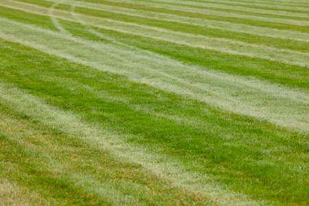 Hippodrome green grass track line
