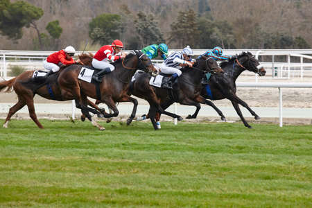 Horse race final rush Stockfoto