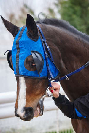 hippodrome: Race horse head with blinkers. Paddock area. Vertical