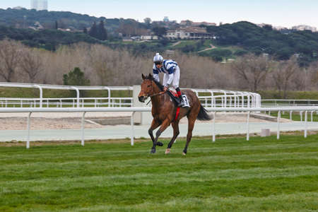 Horse race training. Competition sport. Hippodrome. Speed background Stock Photo